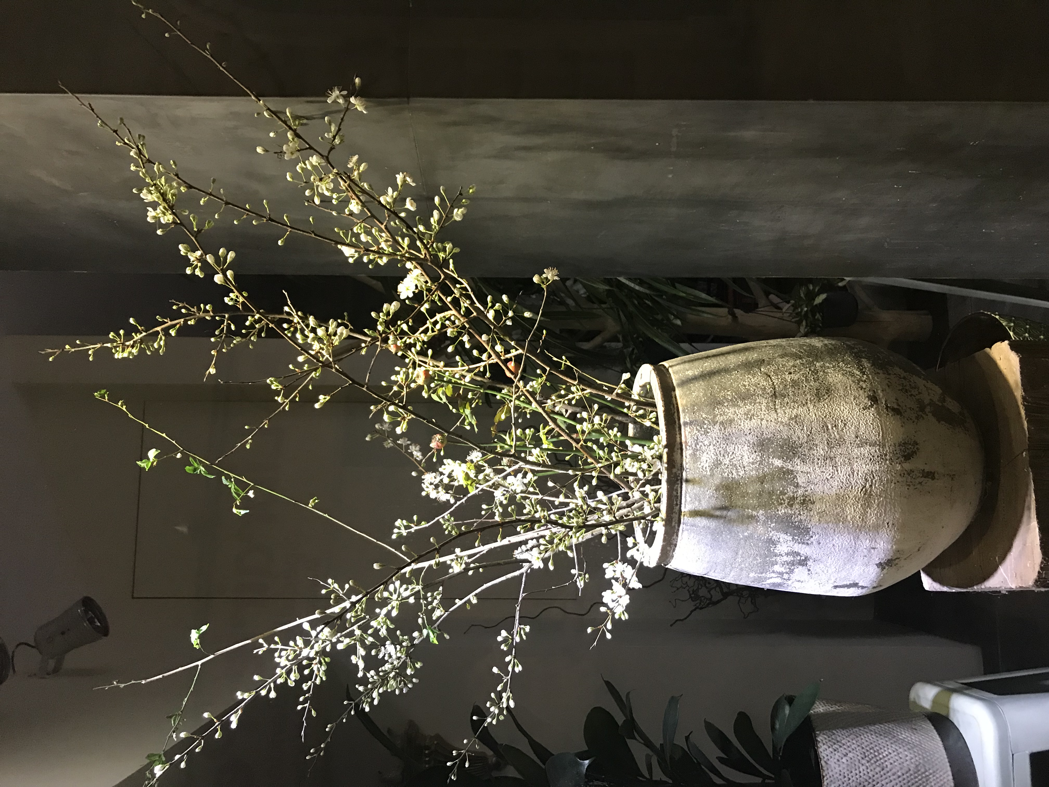 Grand pot terre cuite Marlies Fleurs fleuriste Nimes