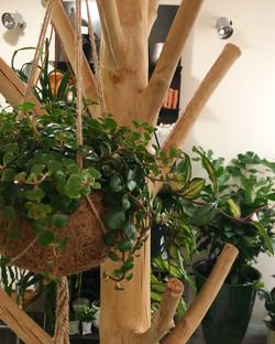 plante kokodama Marlies Fleurs fleuriste Nimes