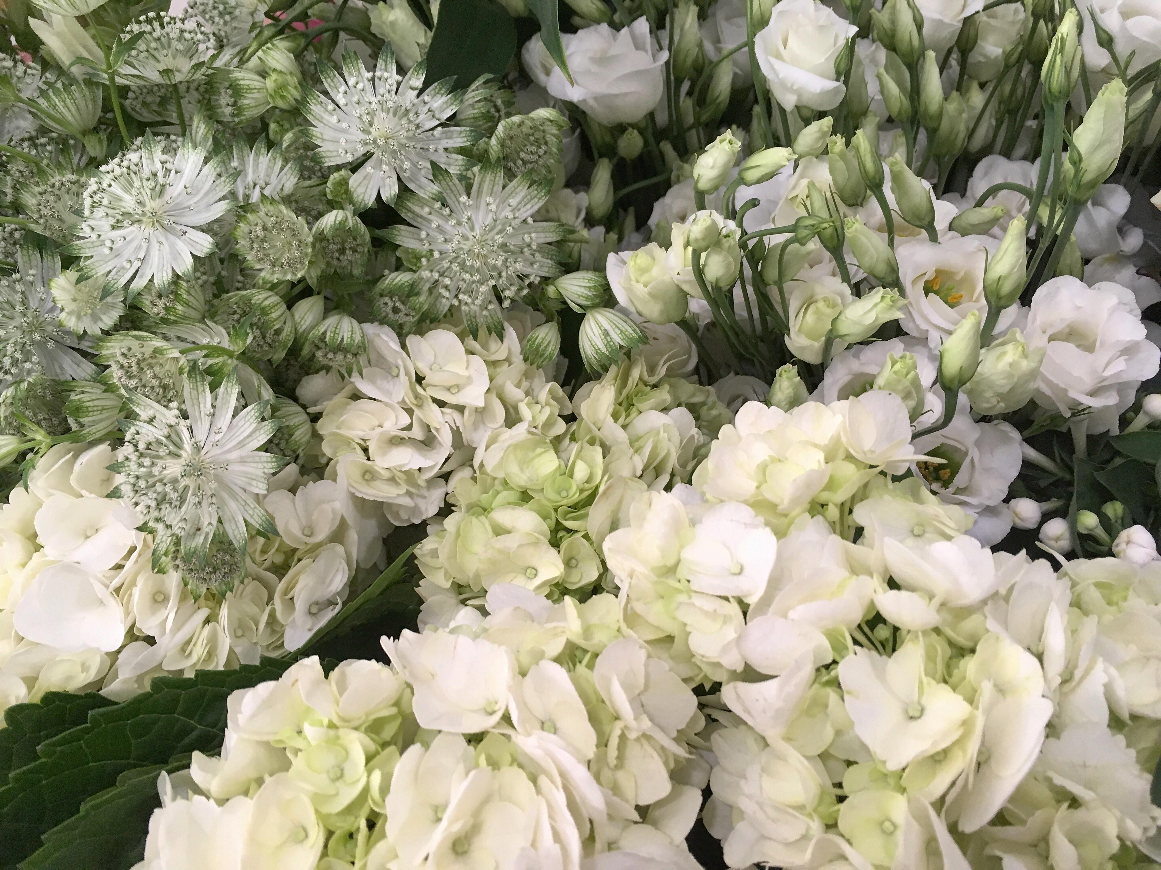 Roses lisianthus astrancia Marlies Fleurs fleuriste Nimes