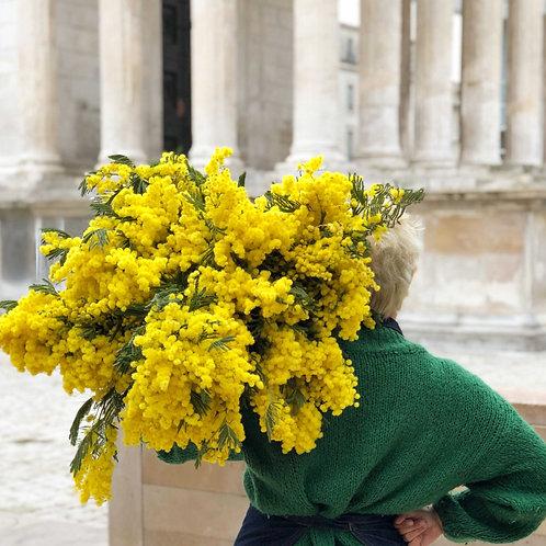 Bouquet de mimosas - à partir de