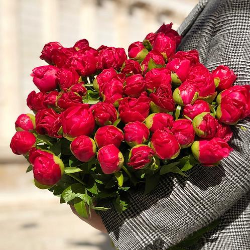 Bouquet de pivoines du moment
