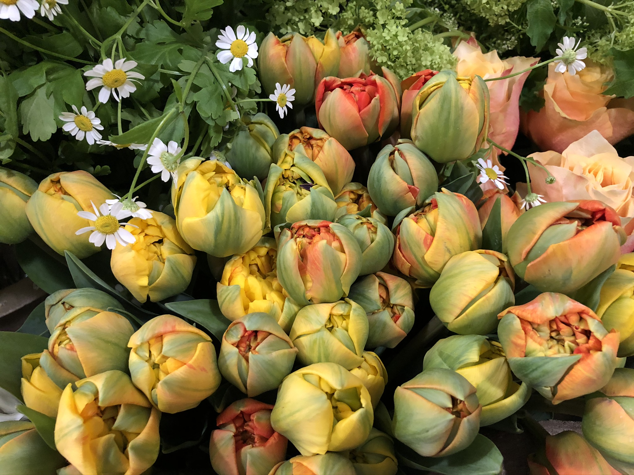 Tulipes Marlies Fleurs fleuriste Nimes