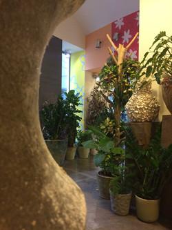 plante zamioculcas Marlies Fleurs fleuriste Nimes
