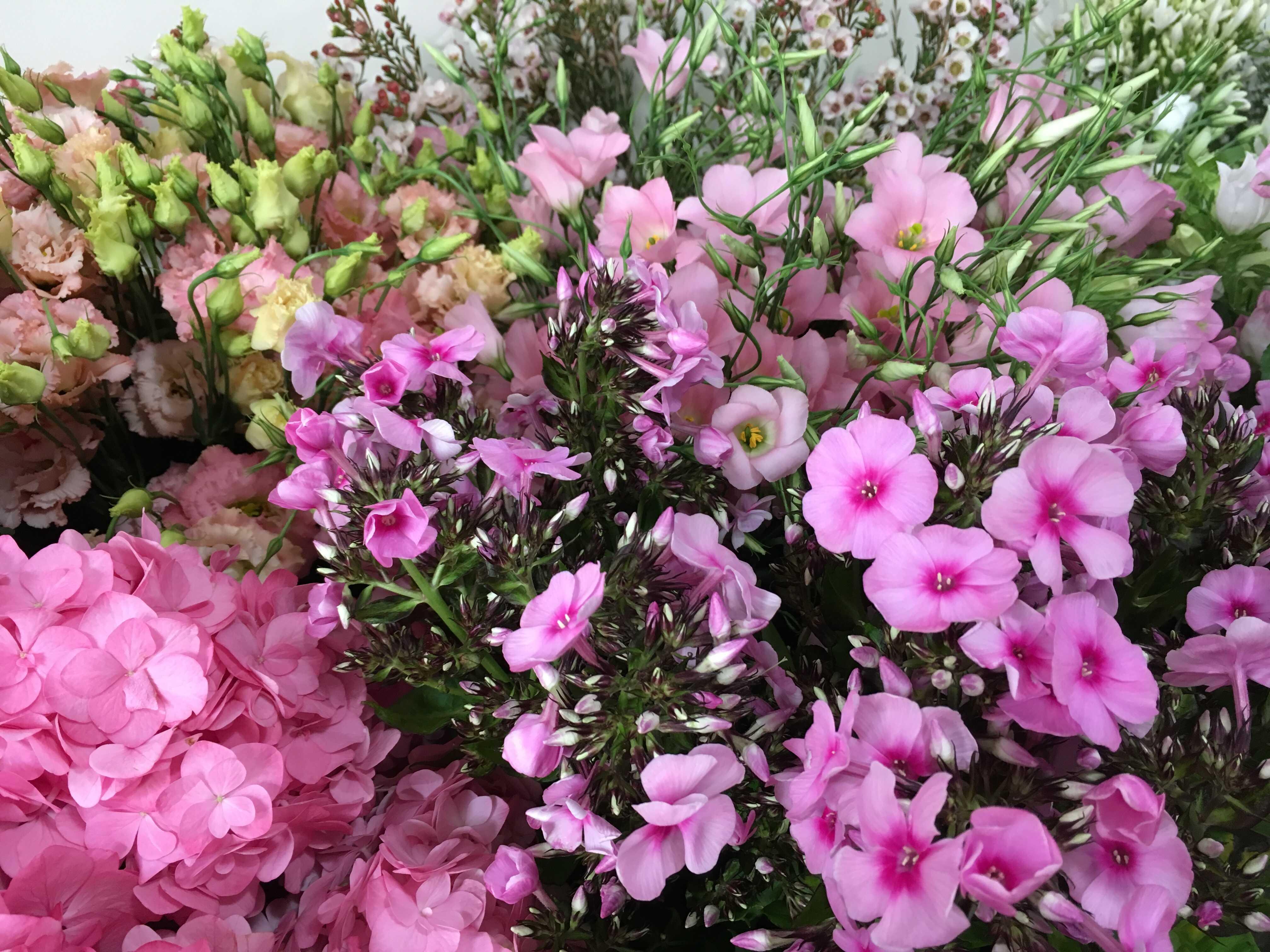 Table phlox lisianthus Marlies Fleurs fl