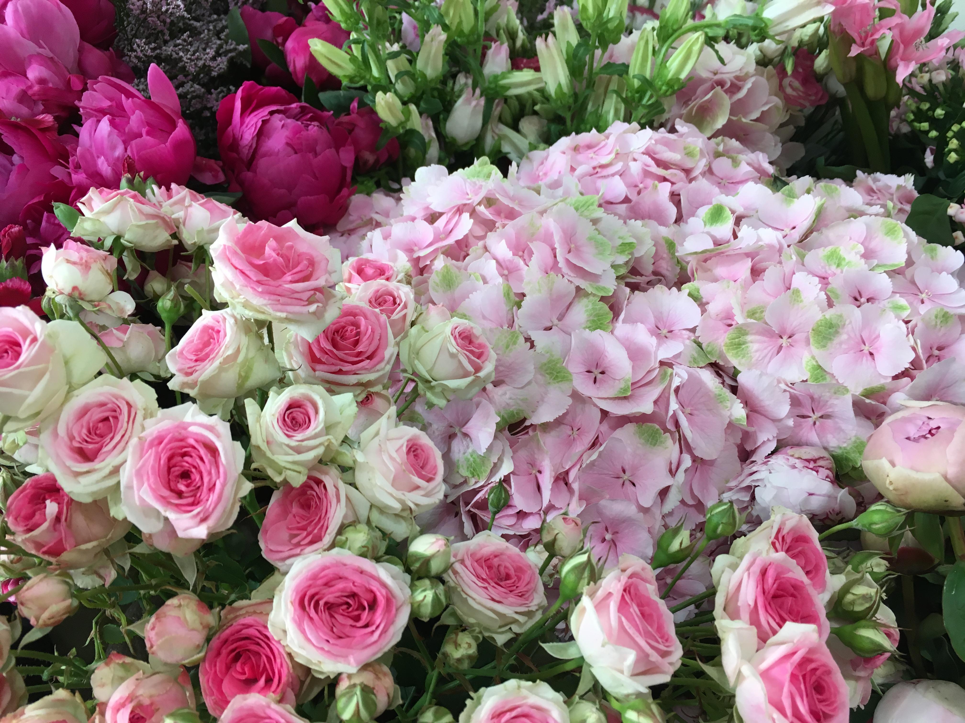 Roses grappes hortensia Marlies Fleurs fleuriste Nimes