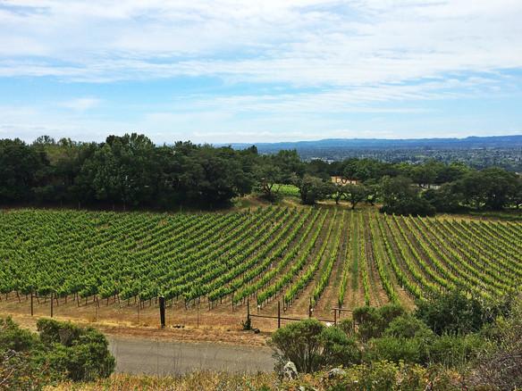 Wine Tasting: Sonoma