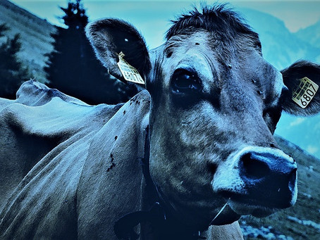 Writing 14: Marquez e la mucca nel giardino