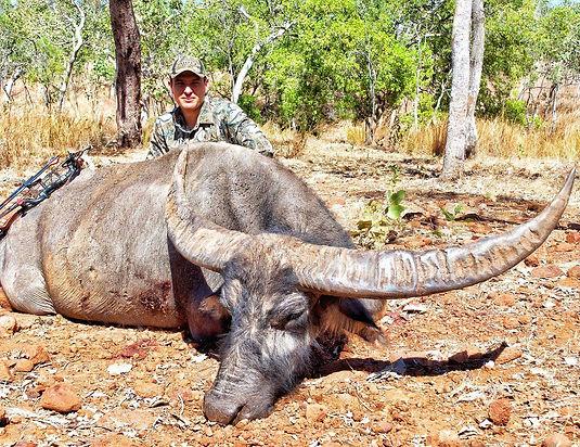 buffalo, cape york, hunting arrows, trophy
