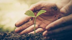 Sustentabilidade como uma prioridade corporativa