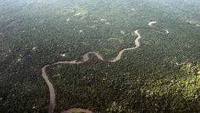Lideranças cobram mais medidas em prol da sustentabilidade no Brasil