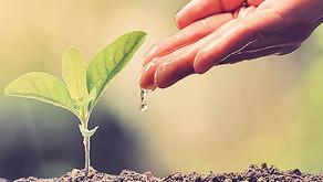 Capital natural: um desafio de todos