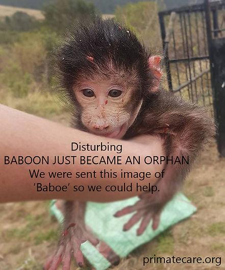 Baboe_orphan.jpg
