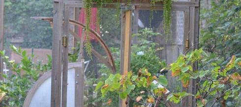 Pretty Baboon and Monkey Proof Veggie Garden