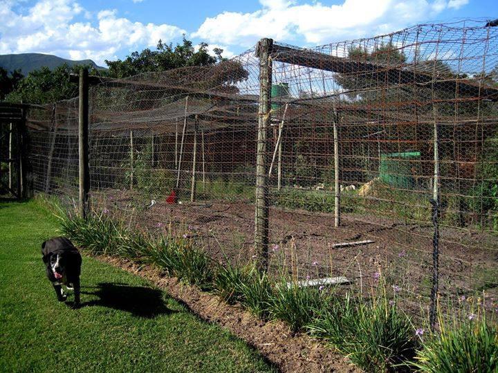 Baboon-Proof Veggie Garden