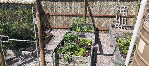 Good Standard Baboon Proof Veggie-Garden