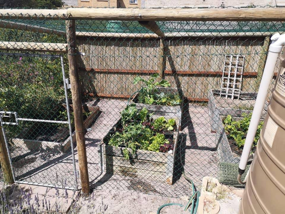 Good Standard Baboon Proof Veggie-Garden