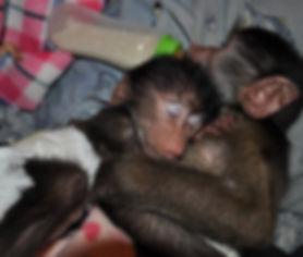 Orphan baboon babies at CARE