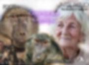 Rita_Miljo, Baboon, Mama Zimfene