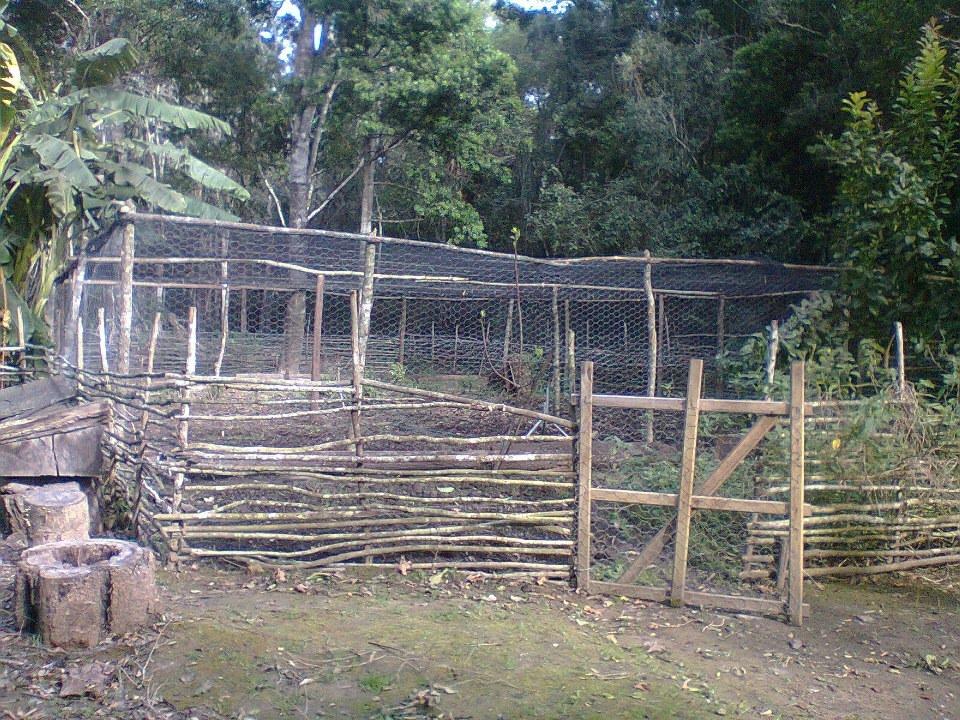Baboon Proof Veggie Garden