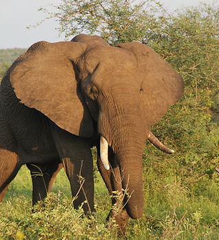 Elephant in Grietie Nature Reserve, CARE