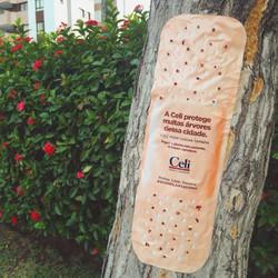Celi - Dia da Árvore