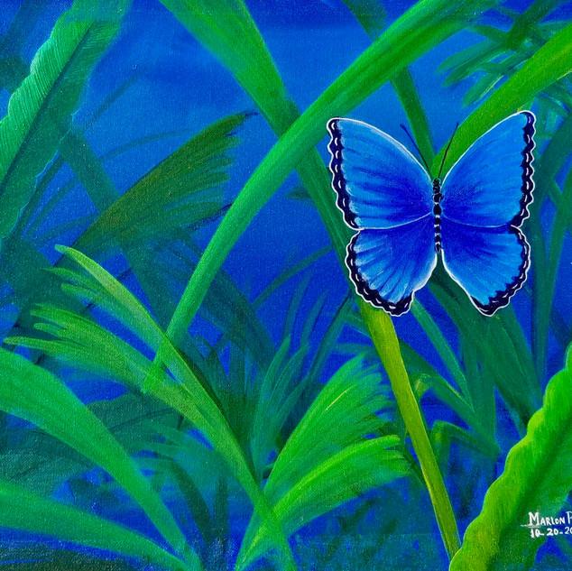 Mariposa (Butterfly), 2015
