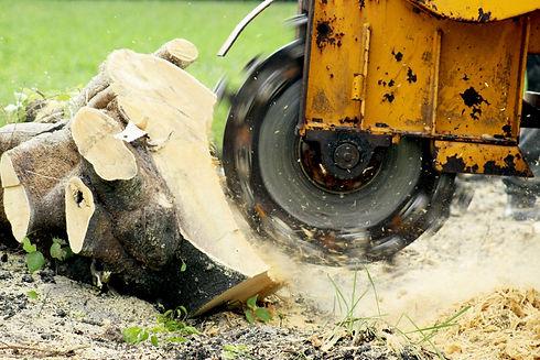 Stump Grinding a Tree Trunk.jpg