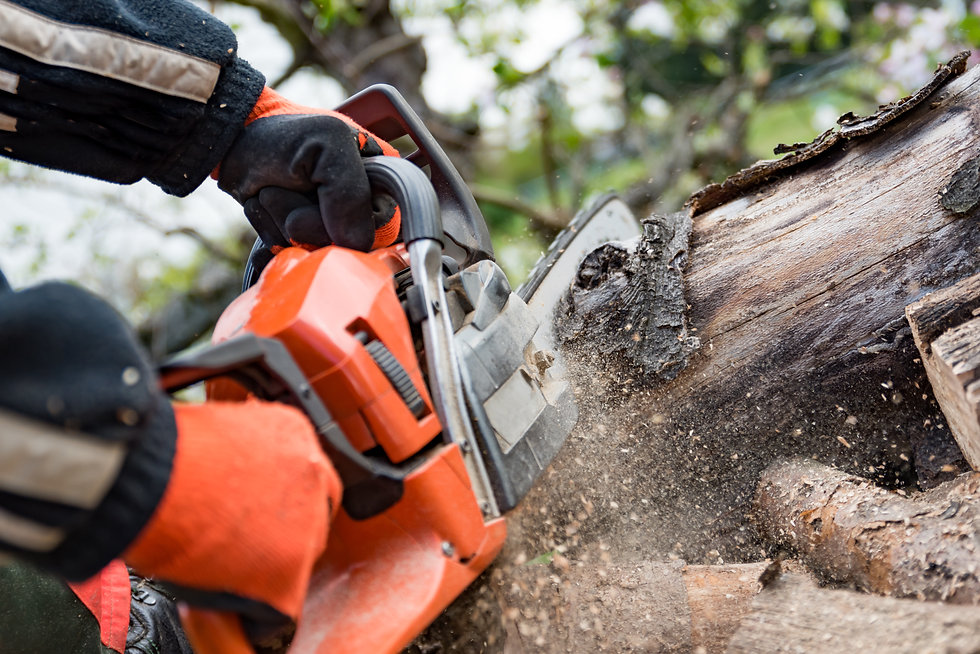 Firewood saws with a chainsaw .jpg
