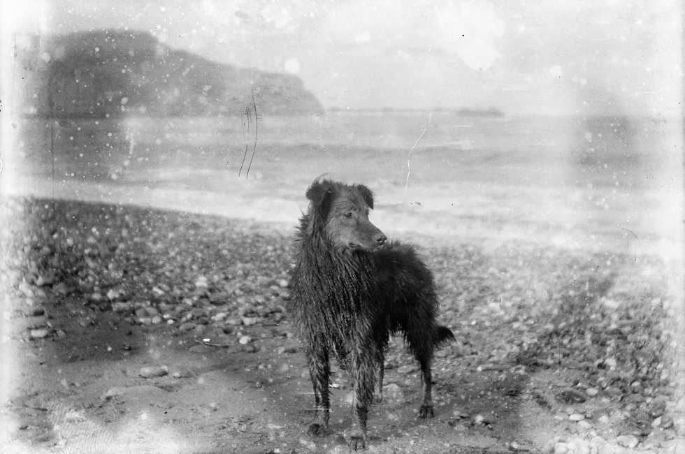 Dog on Beach. C.1900