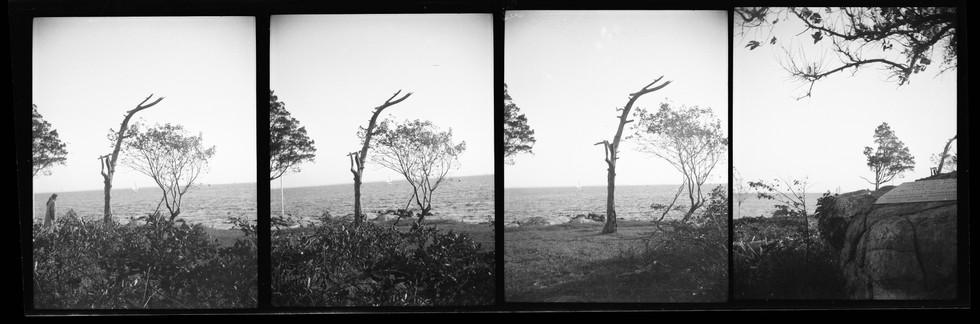 Bell Island - uncut negative strip