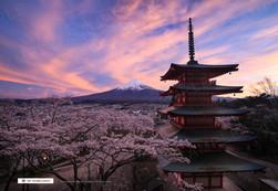 桜と五重塔と富士山の夕景