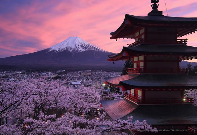 桜と五重塔と富士山の夕景2