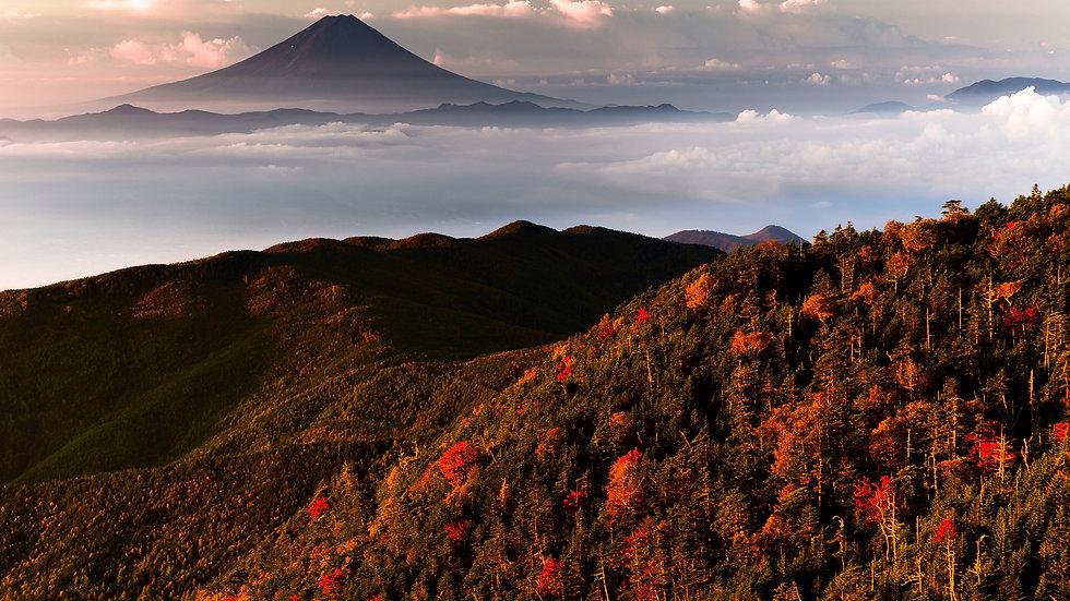 NIF003_009 Photo by Ryota Omata