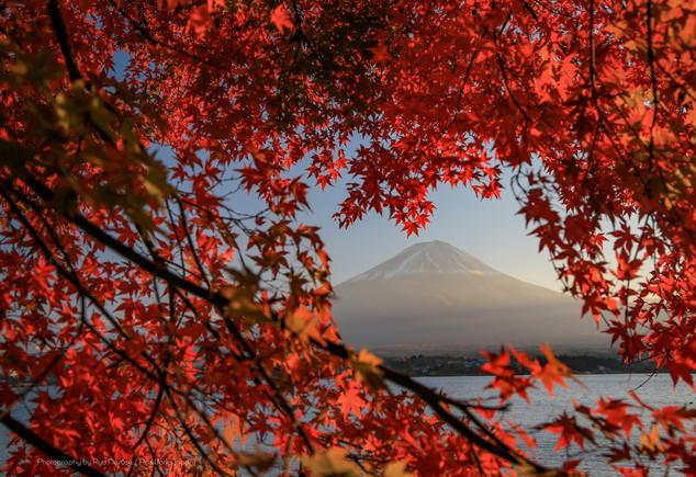 紅葉から望む富士山