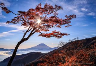 紅葉の樹木と富士山