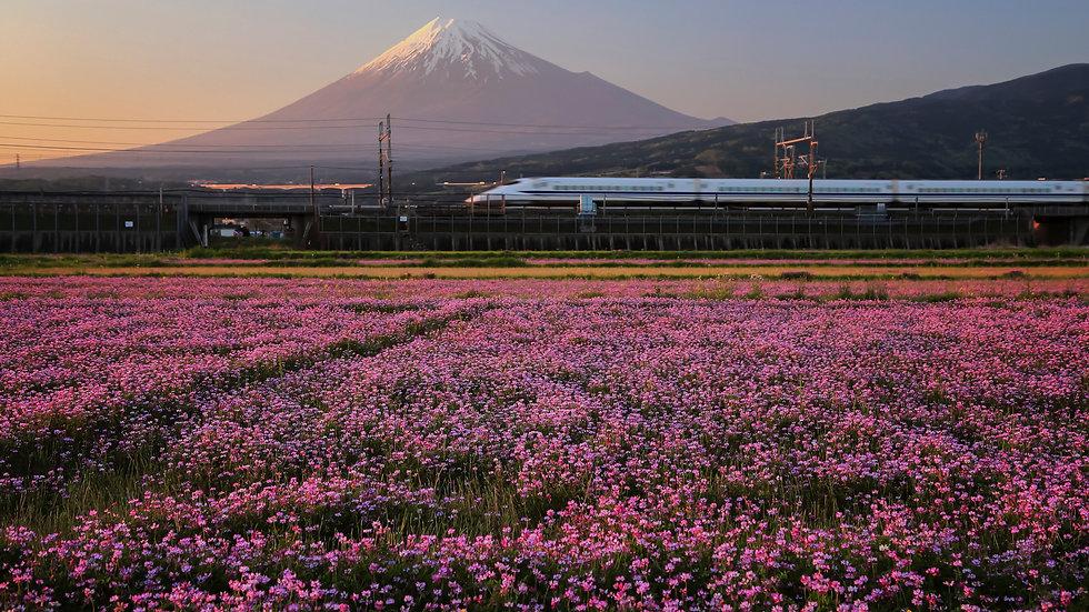 AWJ001_030 Photo by Makoto Hashimuki