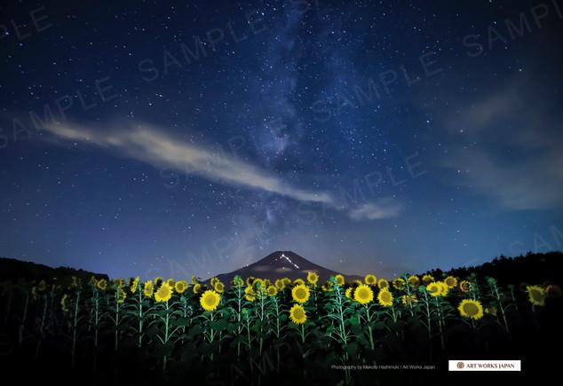 夜のひまわり畑と星空と夏の富士山