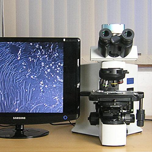 Olympus BX51 Microscope