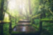 adventure-beautiful-boardwalk-235734.jpg