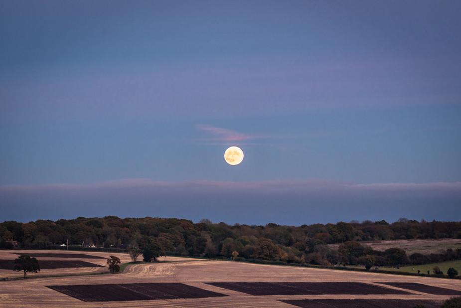 harvest moonlines