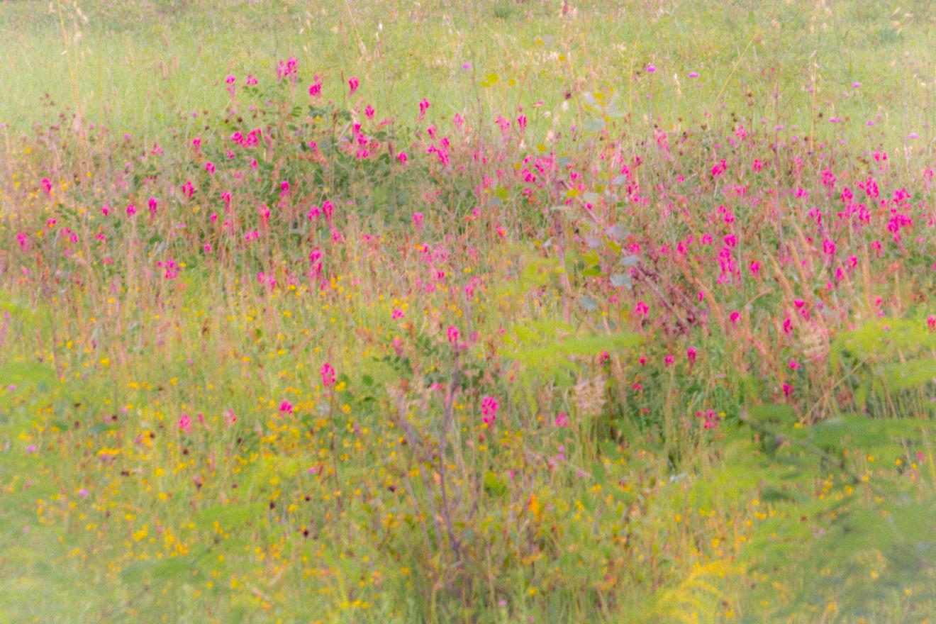 tuscan meadow