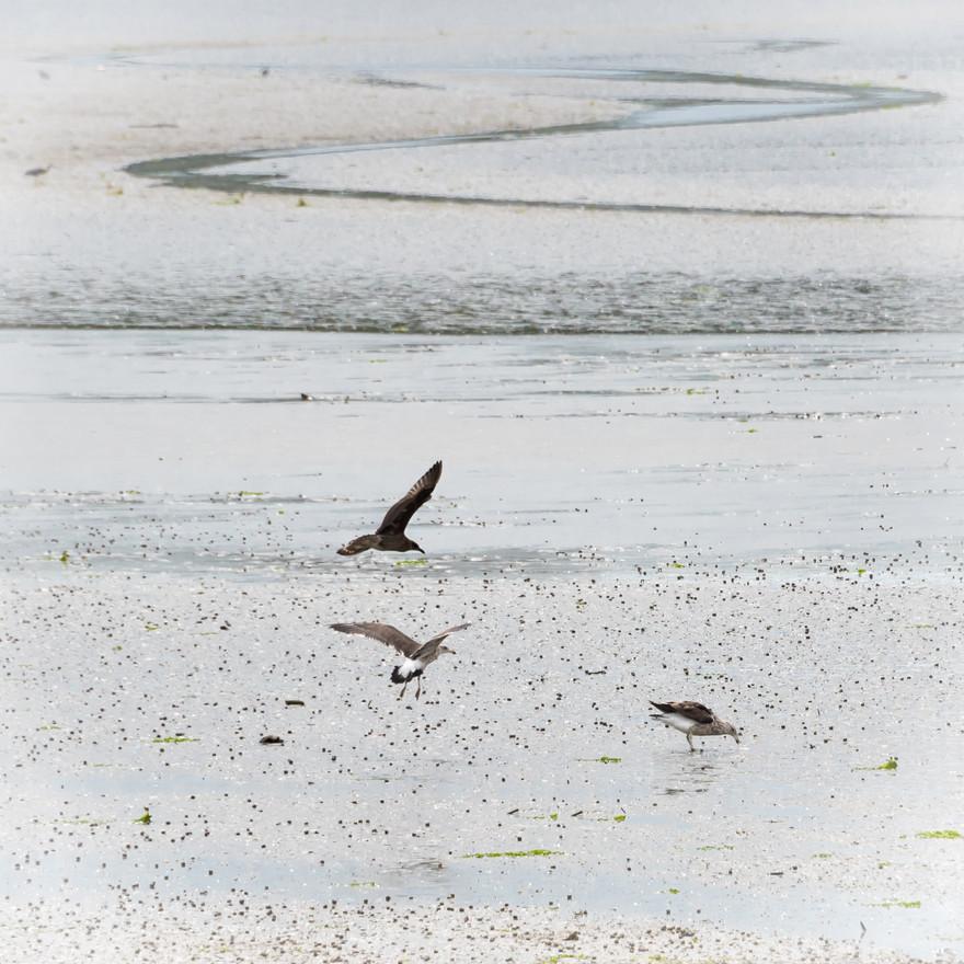 estuary squall