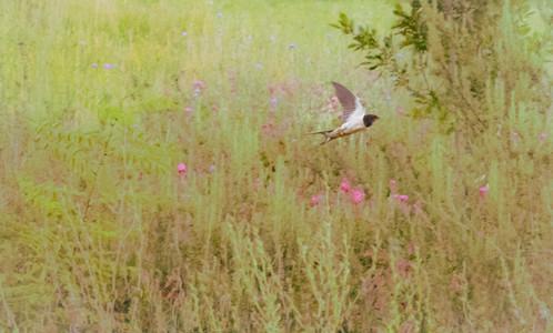 tuscan meadow dance