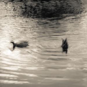 Duck!.jpg