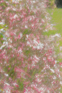 movement in pink