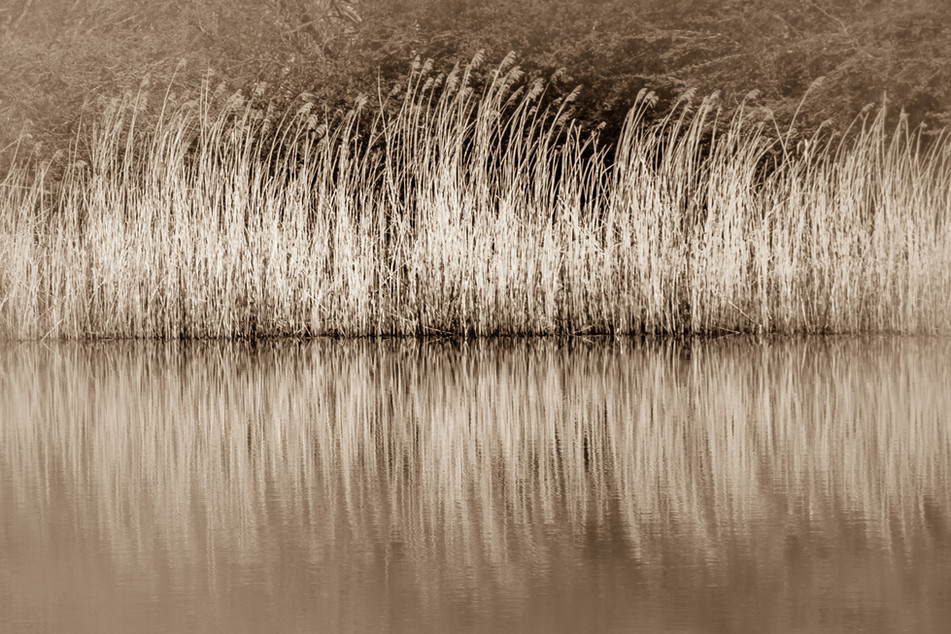 Pond Life.jpg