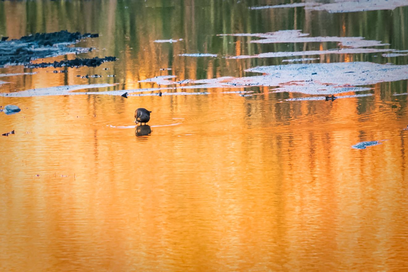 on golden pond 2