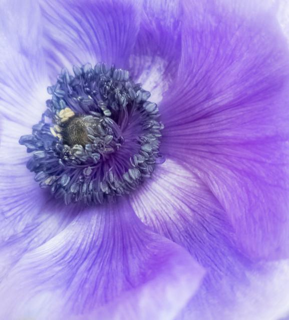 in a poppy