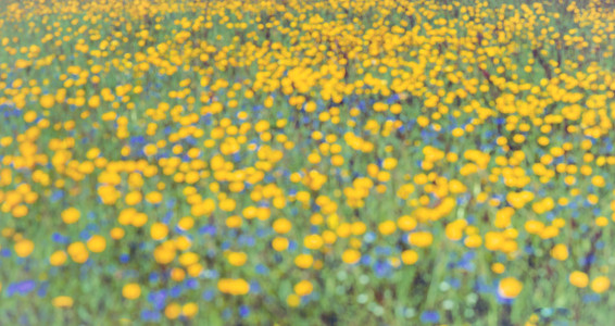 buttercups and bluebells