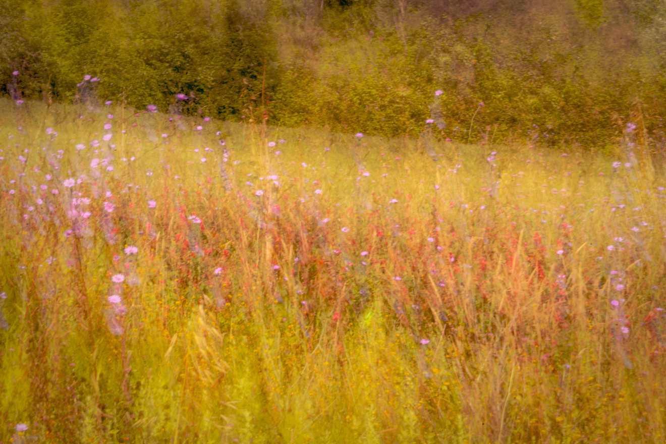 tuscan meadow 2